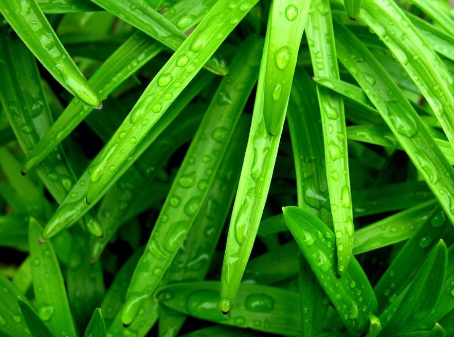 초록풀잎.jpg